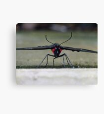 Stealth Bomber Canvas Print
