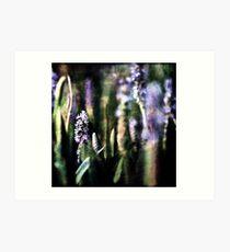 Pickerel Weed Art Print