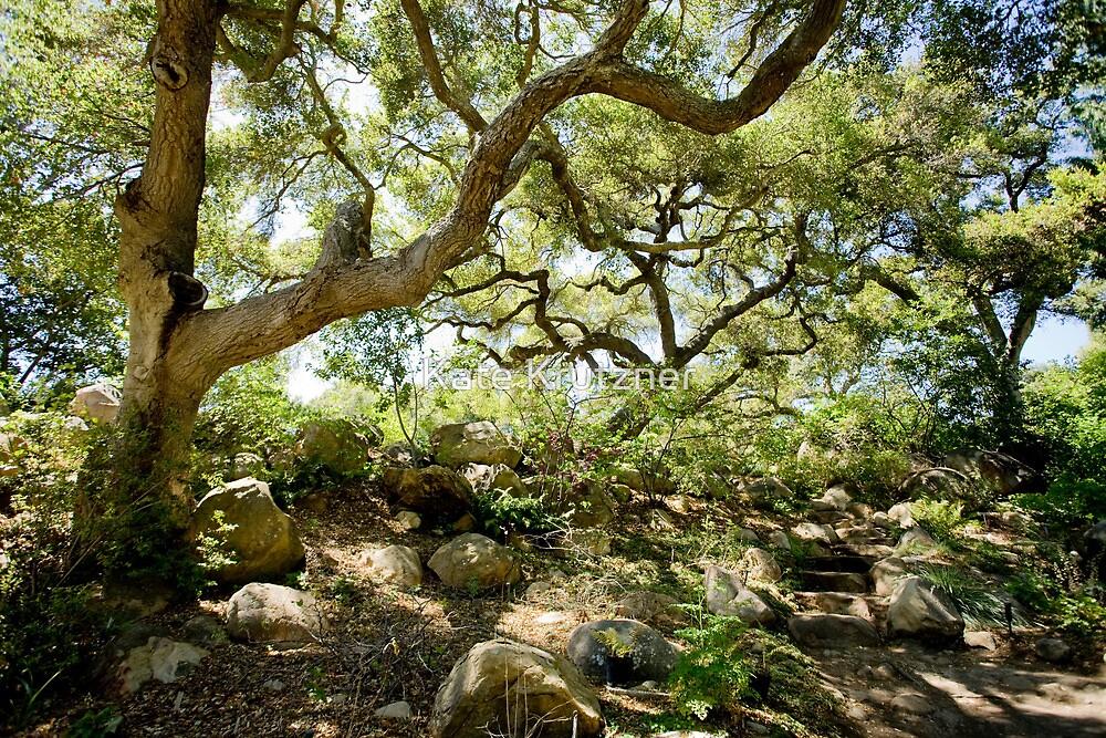 Santa Barbara Botanical Gardens   Coast Live Oak By Katie Krutzner