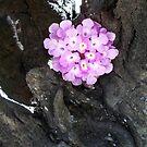 Purple Flower  by Chanzz