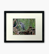 Perched  Framed Print