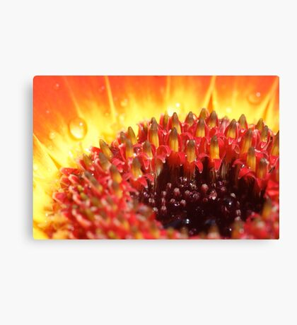 Eviscerated Canvas Print