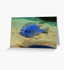 Swimming in the Shallows Greeting Card
