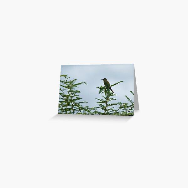 European Bee-Eater Greeting Card