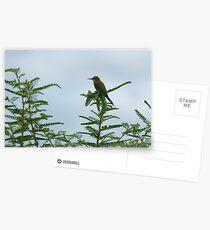 European Bee-Eater Postcards
