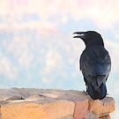 Portrait of a Raven by Zeanana