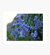 Bluebells - Surrey Art Print