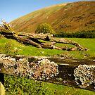 Lake District Lichen by Billlee