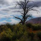 Lone Tree by Barbara Manis