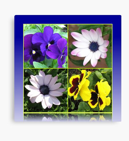 Pretty Pansies and Cute Cape Daisies Floral Collage Leinwanddruck