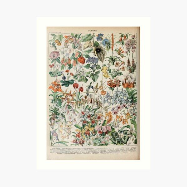 Adolphe Millot fleurs D Lámina artística