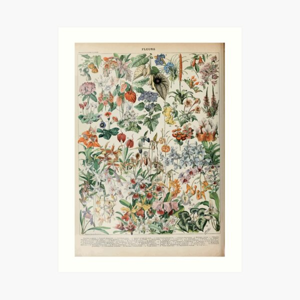 Adolphe Millot fleurs D Art Print