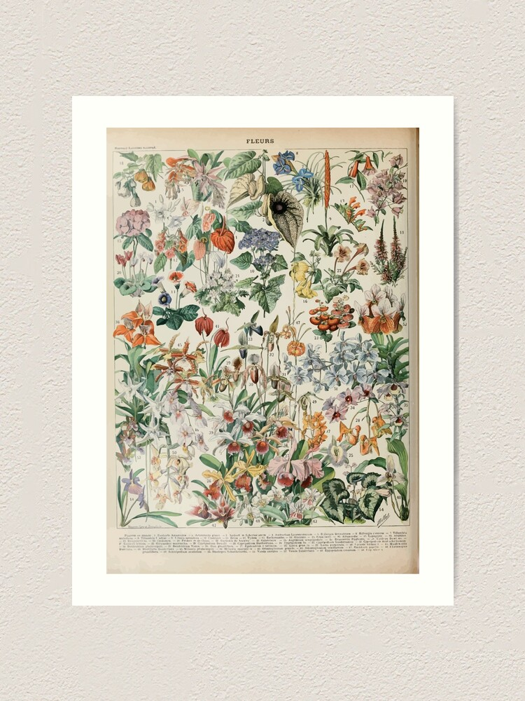 Alternate view of Adolphe Millot fleurs D Art Print