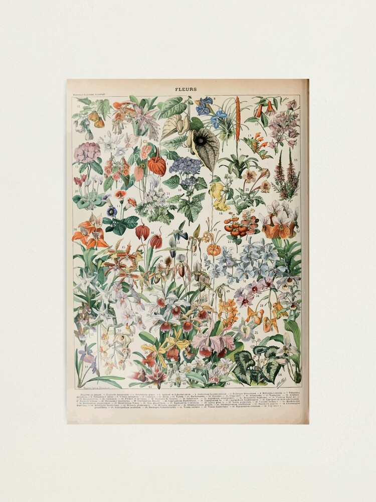 Alternate view of Adolphe Millot fleurs D Photographic Print