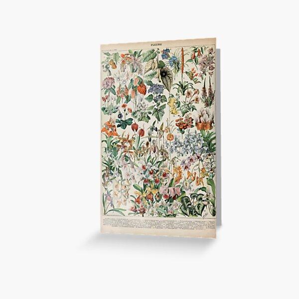 Adolphe Millot fleurs D Greeting Card