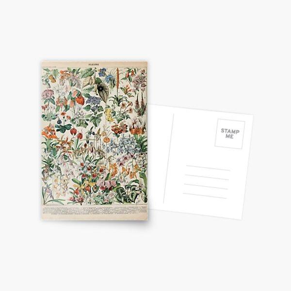 Adolphe Millot fleurs D Carte postale