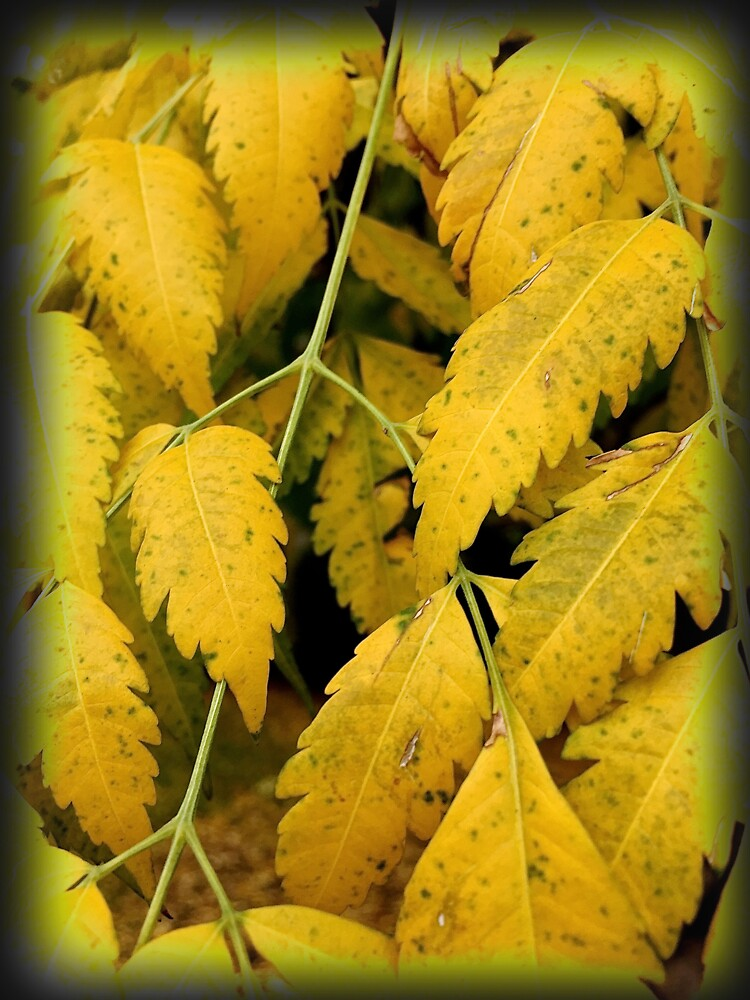 Wisteria Leaves in the Fall by douglasewelch