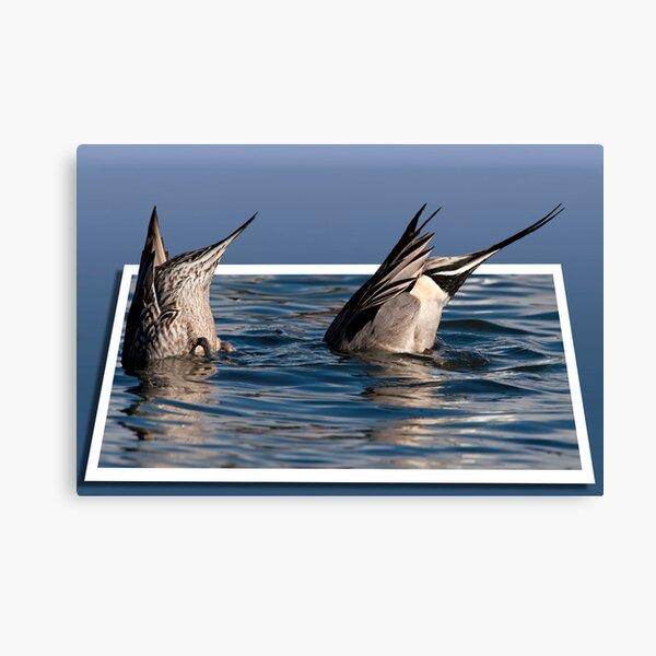 Ducked Canvas Print