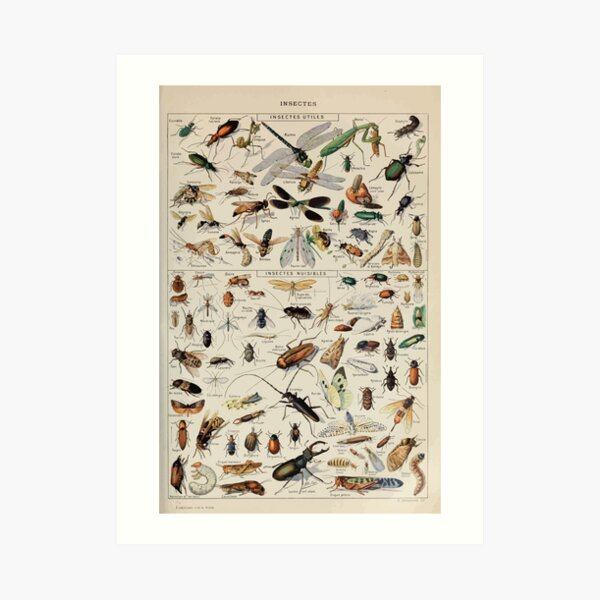 Adolphe Millot insectes Art Print