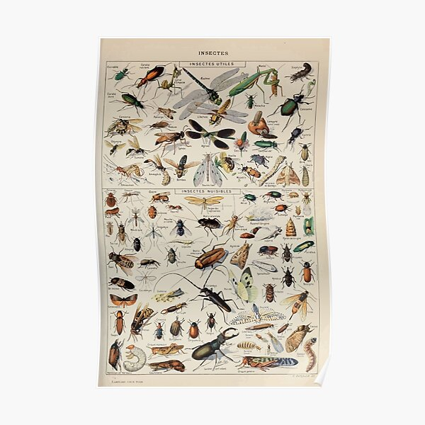 Adolphe Millot insectes Póster