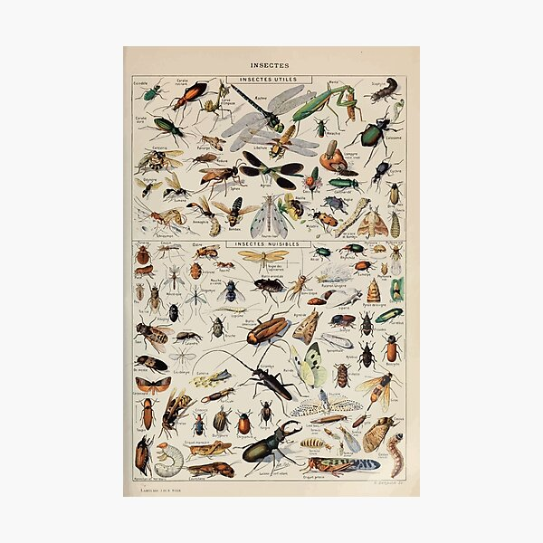 Adolphe Millot insectes Fotodruck