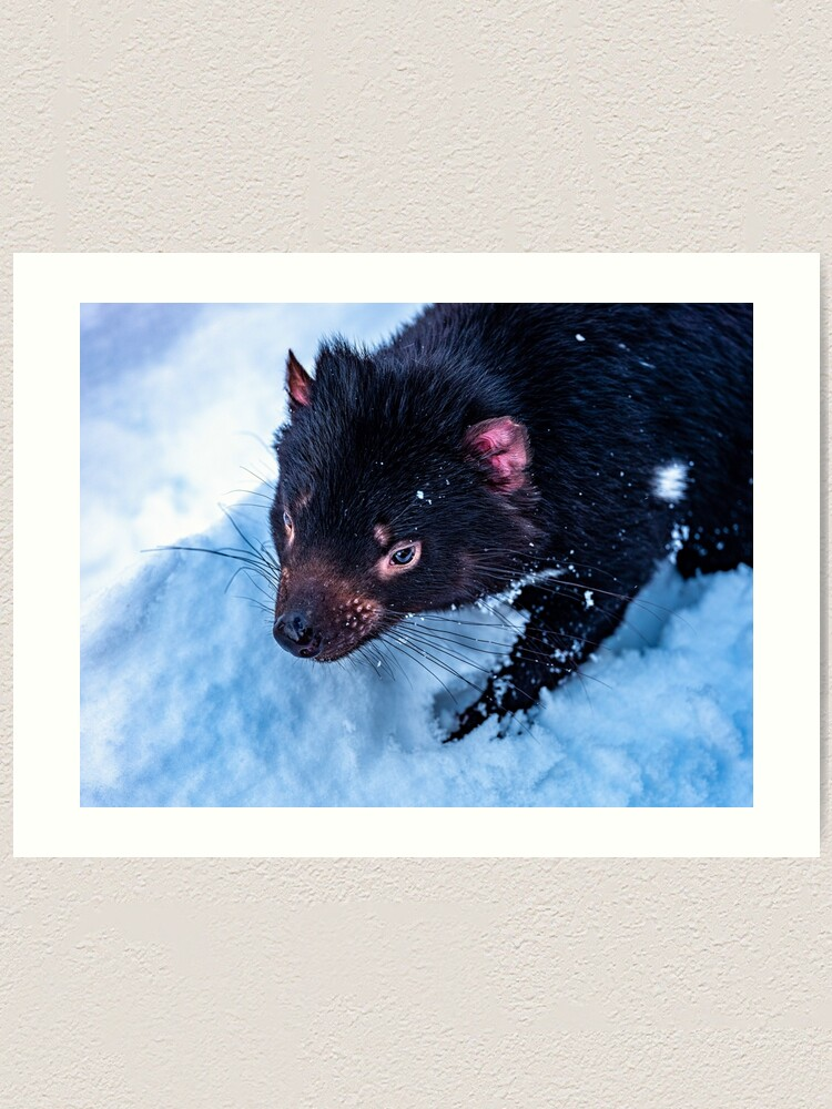Alternate view of Tasmanian Devil Art Print