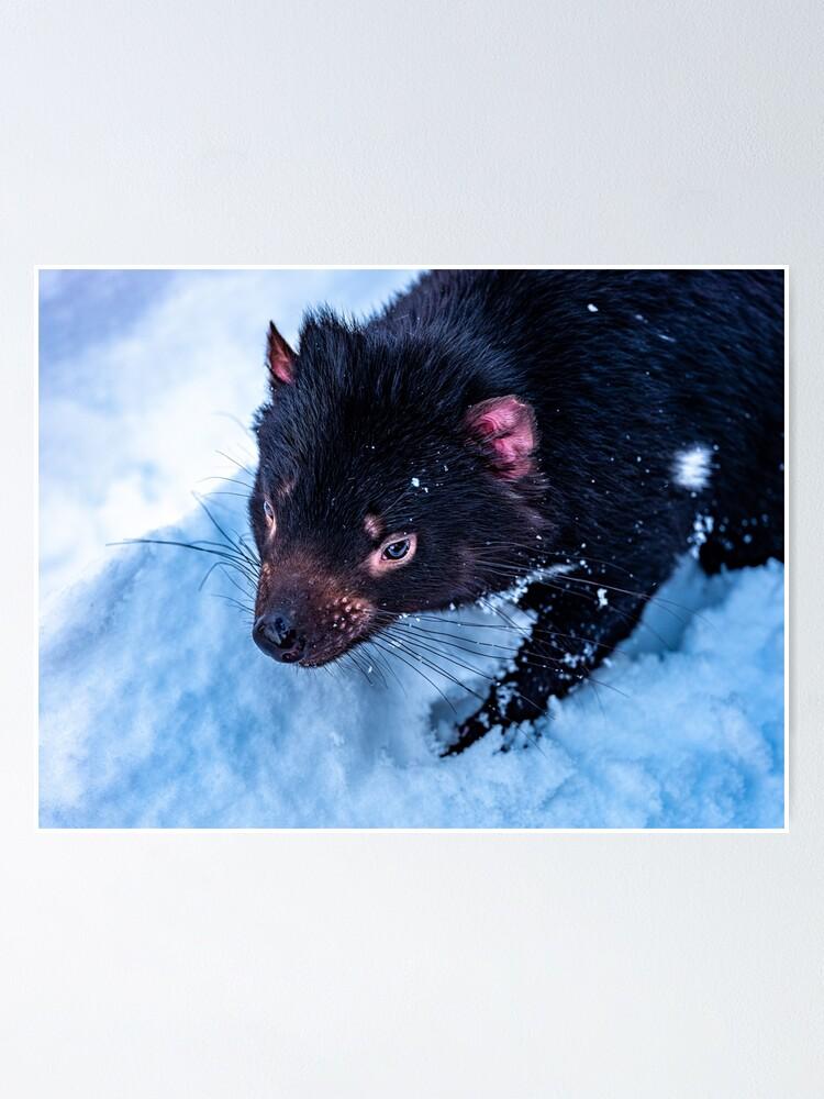 Alternate view of Tasmanian Devil Poster