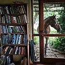 Visitor by Matt Mawson