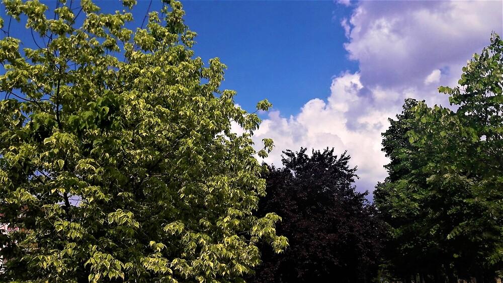 Three Tree Color by tomeoftrovius