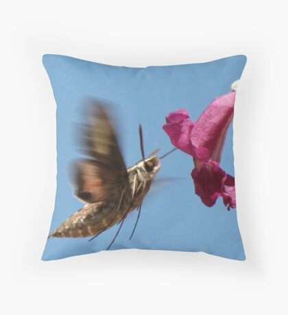 White-lined Sphinx Moth ~ 2 Throw Pillow