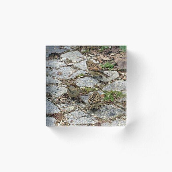 House Sparrows Acrylic Block