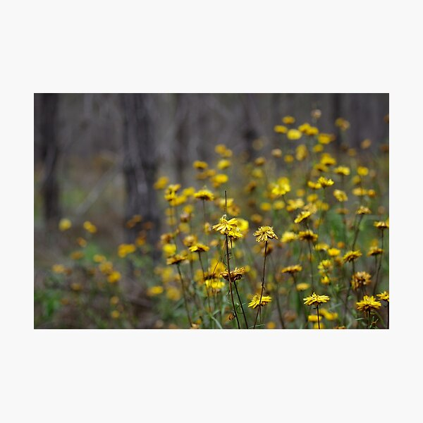 Flowers in the haunted forest Photographic Print