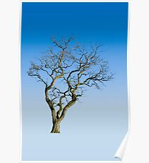 Wire Tree Poster
