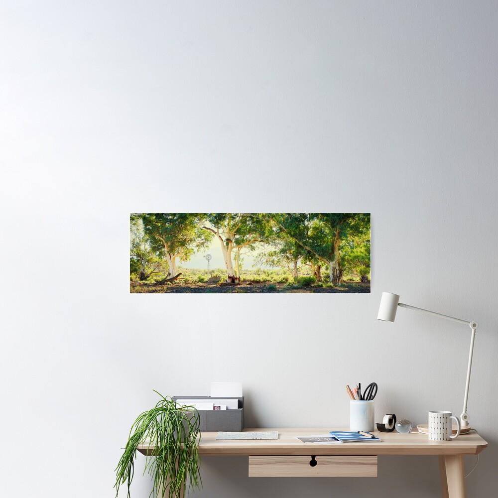 River Gums, Flinders Ranges, South Australia Poster