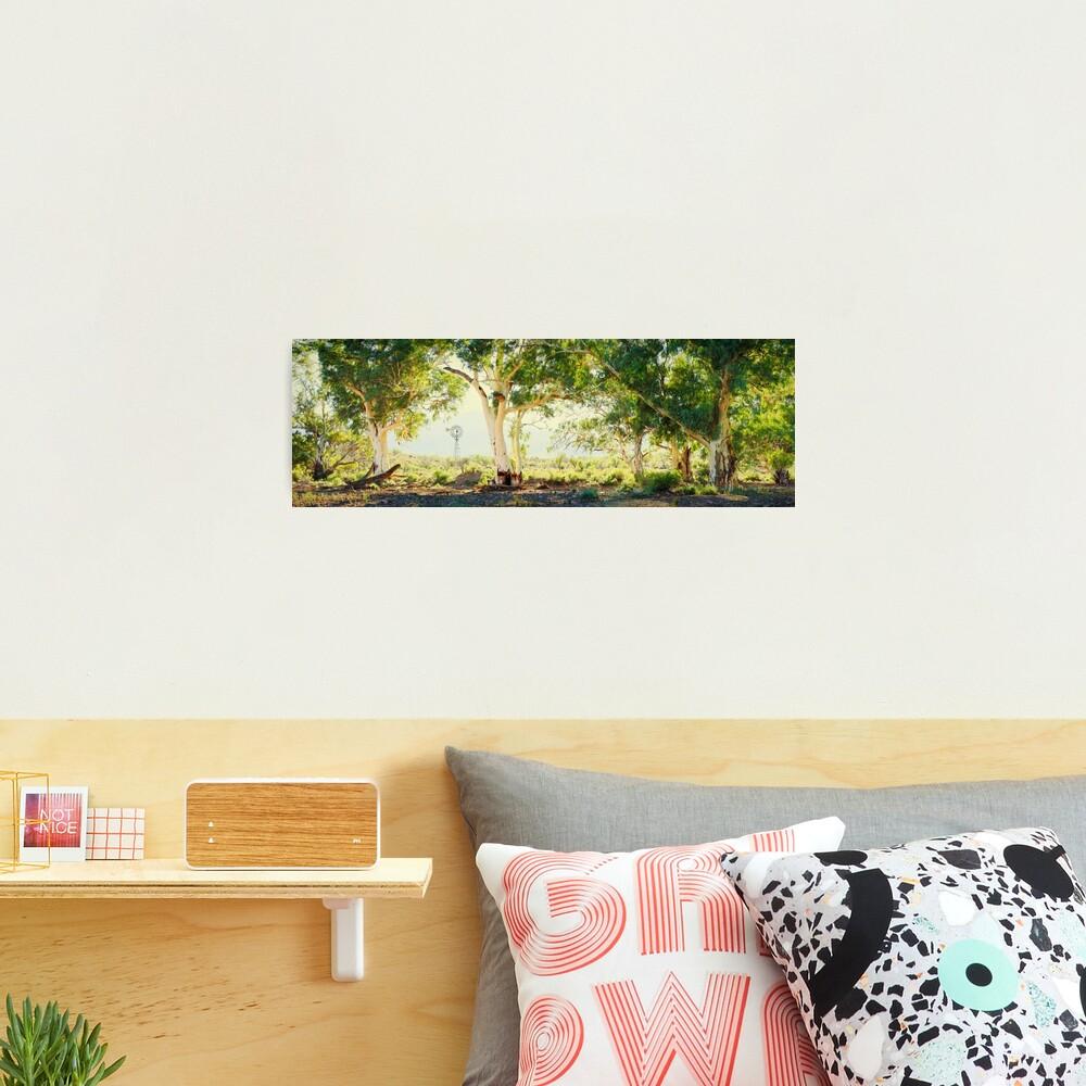 River Gums, Flinders Ranges, South Australia Photographic Print
