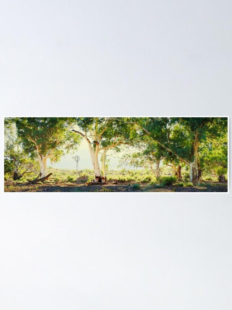 Alternate view of River Gums, Flinders Ranges, South Australia Poster