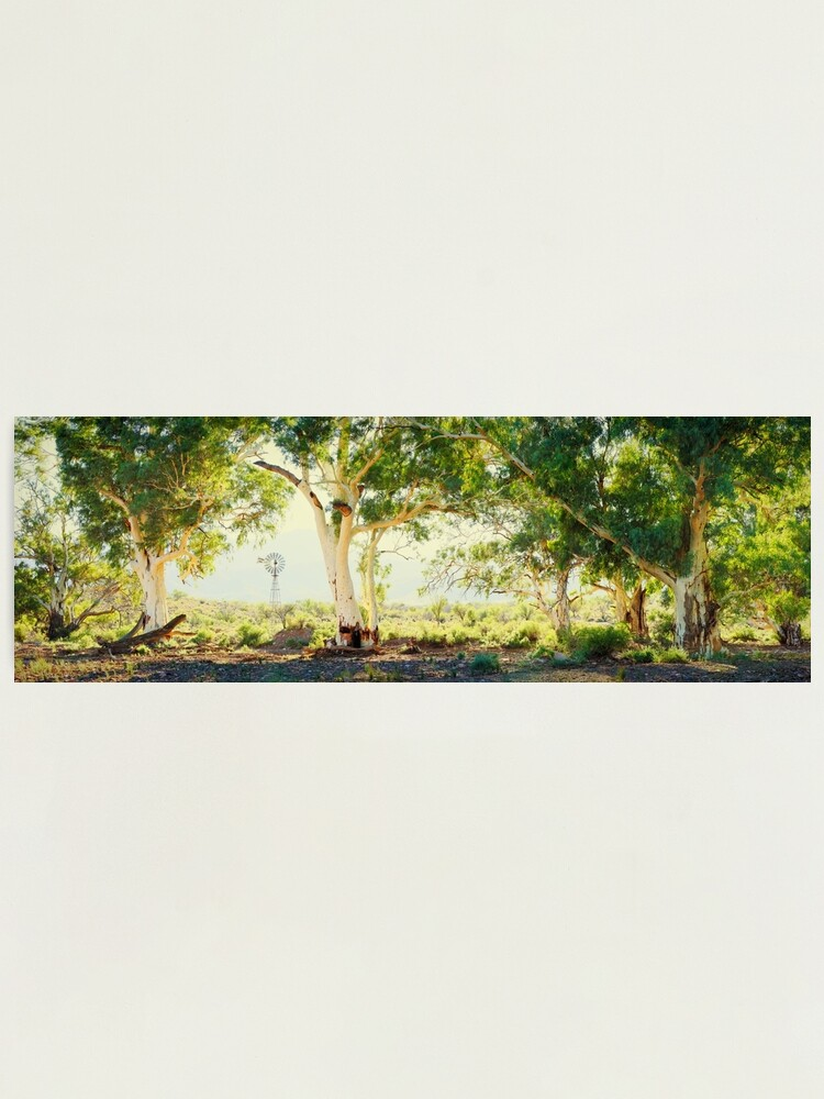 Alternate view of River Gums, Flinders Ranges, South Australia Photographic Print