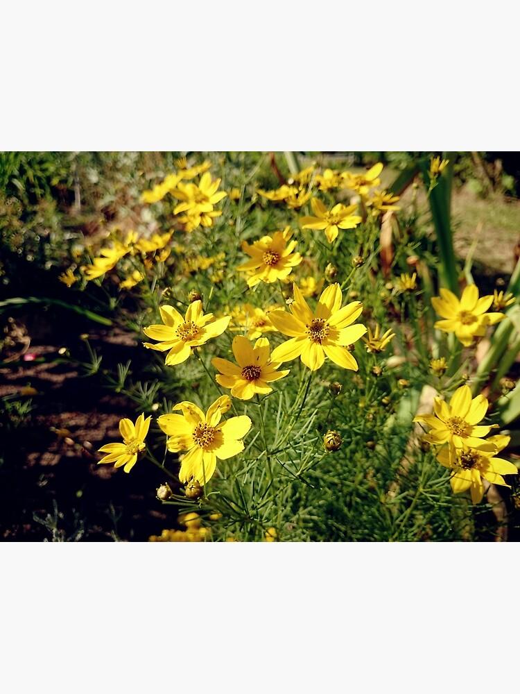 Blüten in Gelb von Gourmetkater