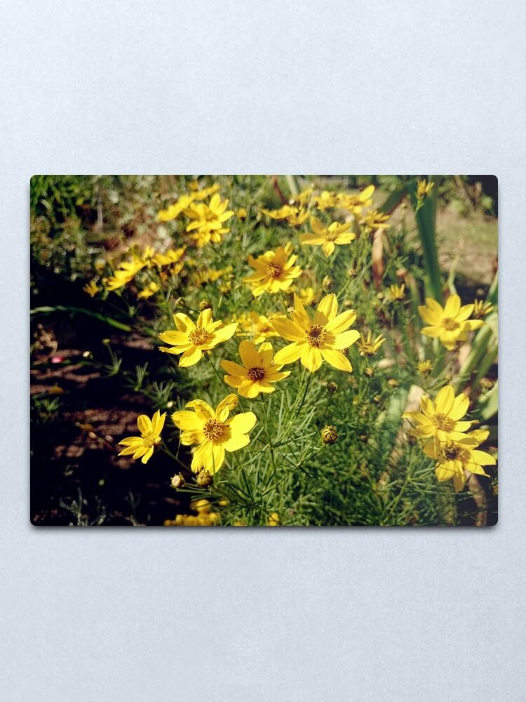 Alternative Ansicht von Blüten in Gelb Metallbild