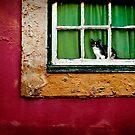Cat in Lisbon by laurentlesax