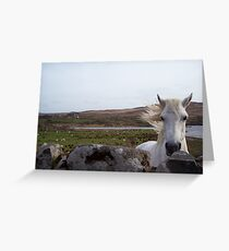 Connemara Pony Greeting Card
