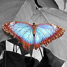 Butterfly Beauty by John Dalkin