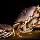 Crabby by ElyseFradkin