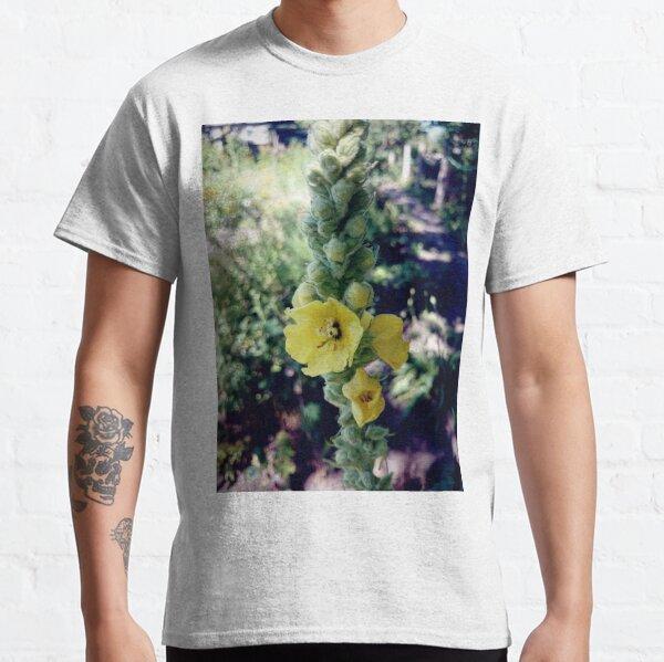Königskerze Classic T-Shirt