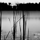 reeds by james smith