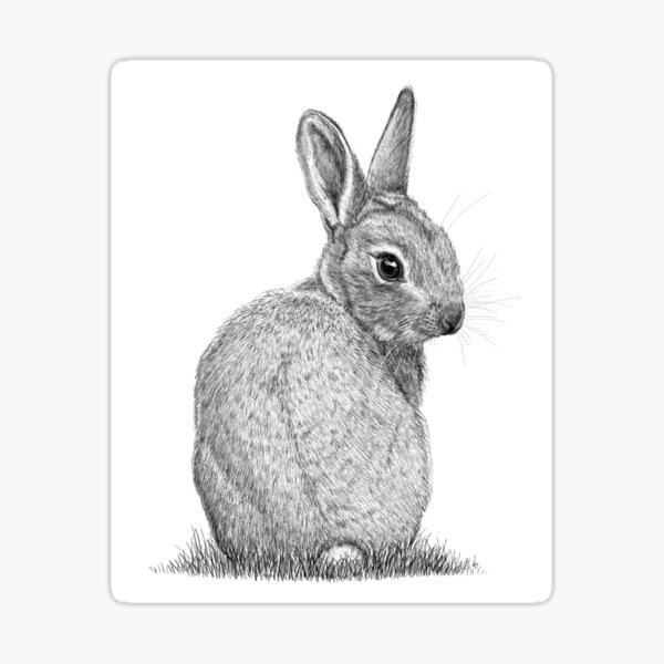 Baby bunny of Norfolk Sticker