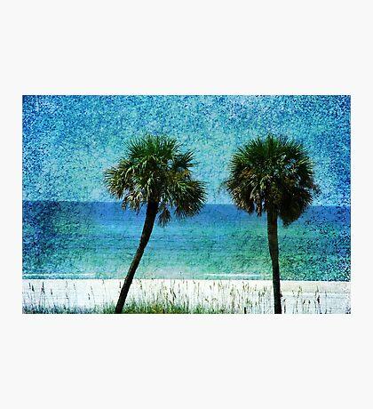 Palm trees at Gulf Coast  Photographic Print