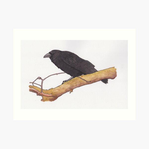 Hugin- raven Art Print