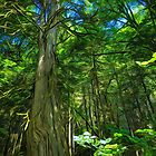 Forest Series: Reaching for the Top by Tracy Riddell