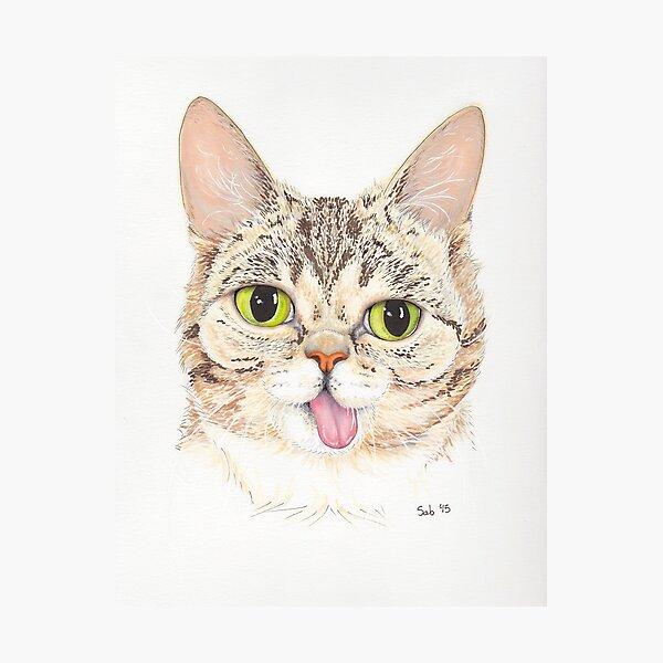 Lil Bub Photographic Print